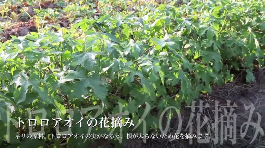 淡路津名紙_002