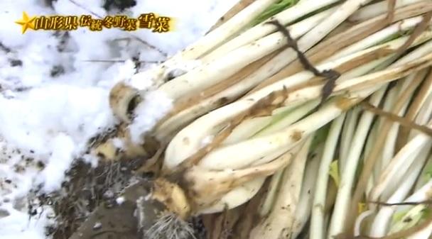 雪菜_収穫2